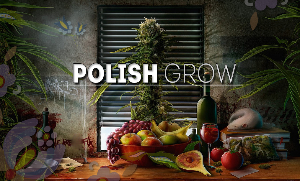Polish Grow – Nasiona Marihuany